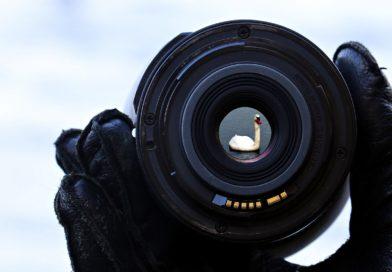 Les meilleurs concours photo 2020 : Photographie animalière