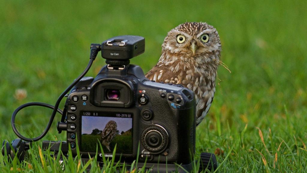concours photo animalière payants