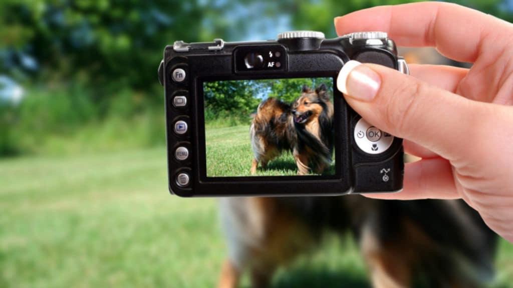 concours photo animalière gratuits