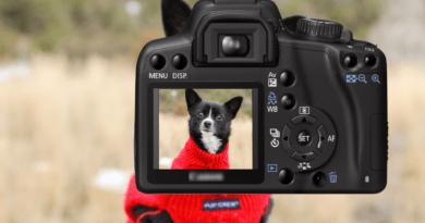 appareil pour photographie animalière