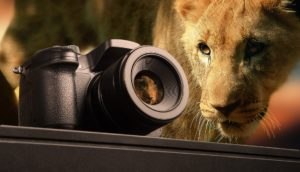 appareil photo pour safari