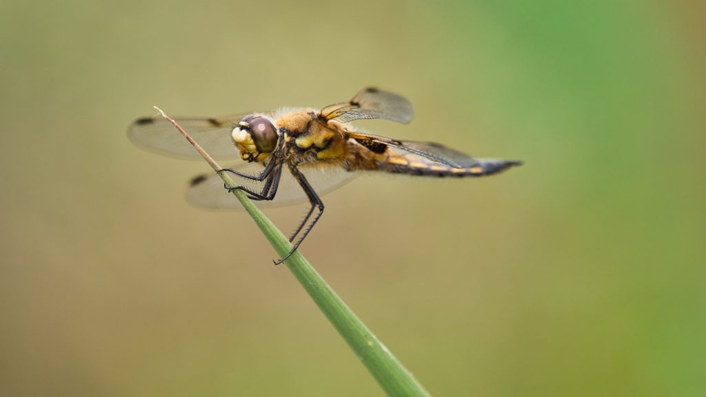 macrophotographie insecte